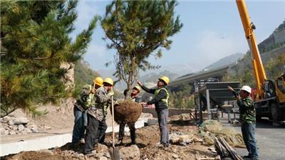 北京冬奧會延慶賽區生態修復工程完工94%